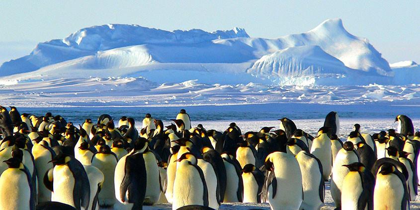 pinguins op antarctica